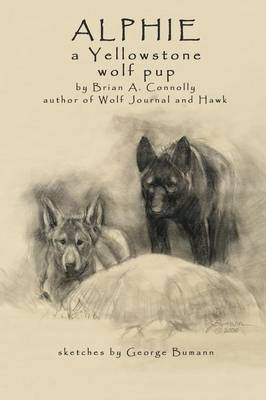 Alphie, a Yellowstone Wolf Pup by Brian A Connolly