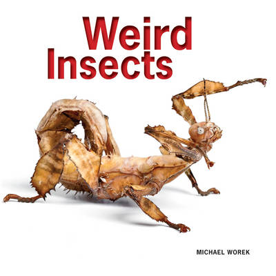 Weird Insects by Michael Worek