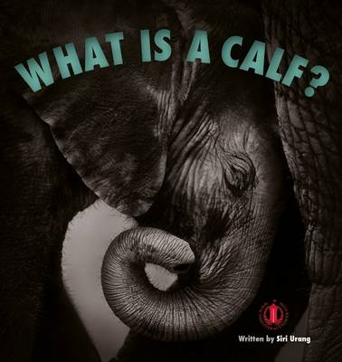 What is a Calf? by Siri Urang