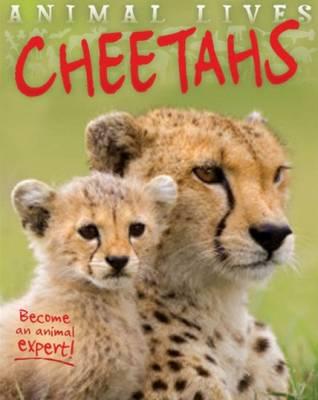 Animal Lives: Cheetahs by Sally Morgan