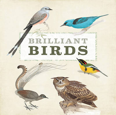 Brilliant Birds by