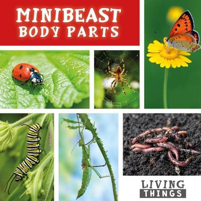 Minibeast Body Parts by Steffi Cavell-Clarke