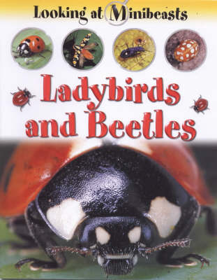 Ladybirds and Beetles by Sally Morgan