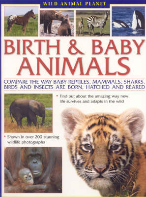 Birth and Baby Animals Compare the Way Reptiles, Mammals, Sharks, Birds and Insects are Born and How They are Reared by Michael Chinery