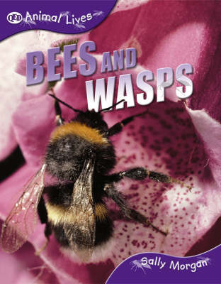 Bees and Wasps by Sally Morgan