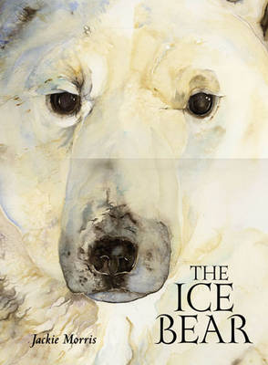 Ice Bear by Jackie Morris