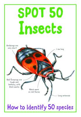 Spot 50 Insects by Camilla De la Bedoyere