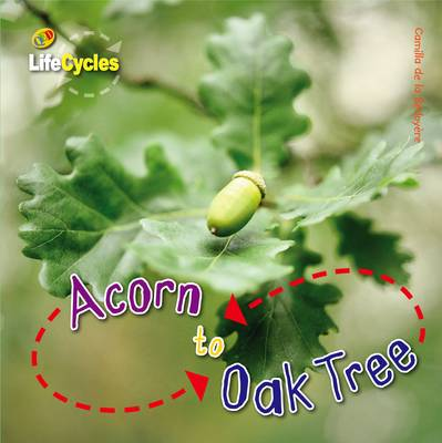 Life Cycles: Acorn to Oak Tree by Camilla De la Bedoyere