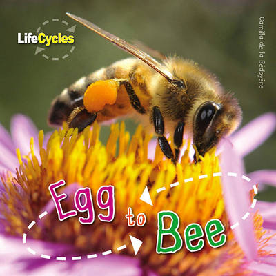 Life Cycles: Egg to Bee by Camilla De la Bedoyere