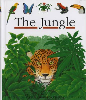 The Jungle by Rene Mettler, Gallimard Jeunesse