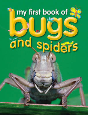 Bugs and Spiders by