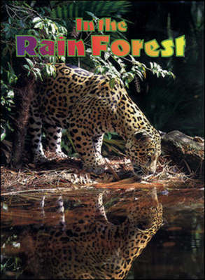 In the Rain Forest Leopard by