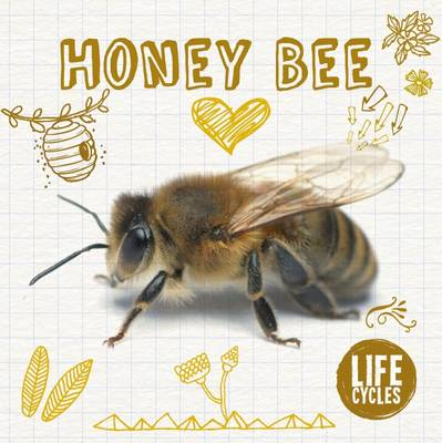 Life Cycle of a Honey Bee by Grace Jones