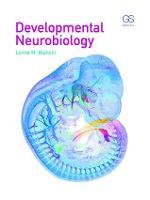 Developmental Neurobiology by Lynne (Author of forthcoming Introduction to Developmental Neurobiology) Bianchi