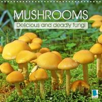 Mushrooms - Delicious and Deadly Fungi 2018 Fungi - the Strange and Wonderful Forms of Mushrooms by Calvendo