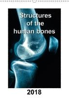 Structures of the human bones 2018 Structure of bones with detailed x-ray pictures in colour by Georg Hanf