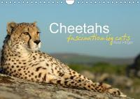 Cheetahs Fascinating Big Cats 2018 Cheetahs are Amongst the Most Fascinating Wild Cats, but Unfortunately the Fast Hunters are Threatened of Extinction. by Axel Hilger