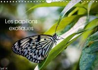 Les Papillons Exotiques 2018 Calendrier Mensuel De 14 Pages Dedie Aux Majestueux Papillons by Lyat'Art