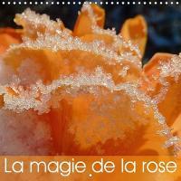 La Magie De La Rose 2018 De Magnifiques Roses Lumineuses, De Varietes Et De Couleurs Differentes. by Beate Vogl