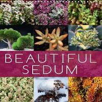 Beautiful Sedum 2018 Portraits of Beautiful Sedum Varieties by Martina Cross