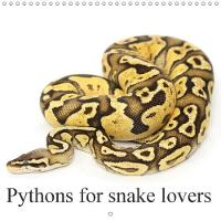 Pythons for Snake Lovers 2018 Various Python Morphs by SchnelleWelten