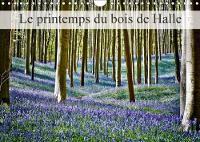 Le Printemps Du Bois De Halle 2018 Hallerbos, La Foret Feerique by Bombaert Patrick