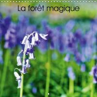La Foret Magique 2018 Hallerbos, La Foret Feerique by Bombaert Patrick