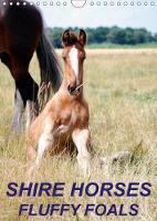 Shire Horses, Fluffy Foals 2018 Beautiful and Cute Pictures of Shire Horse Foals by Liesbeth Wesdijk