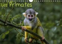 Les Primates 2018 Retrouvez Les Portraits Des Principaux Representant Des Primates. by Franckfotography