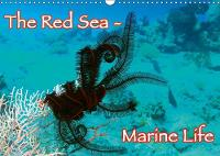 The Red Sea - Marine Life 2018 Underwater Photography from the Red Sea - Enjoy it. by Lars Eberschulz