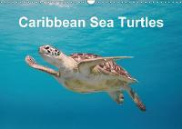 Caribbean Sea Turtles 2018 Magical encounter with sea turtles! by Yvonne & Tilo Kuhnast - naturepics