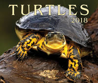 Turtles 2018 by Firefly Books