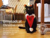 My Sad Cat Christmas Cards by Tom Cox