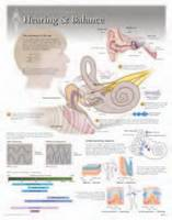 Hearing & Balance by Scientific Publishing