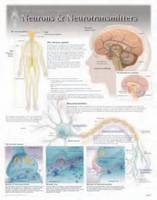 Neurons & Neurotransmitters by Scientific Publishing