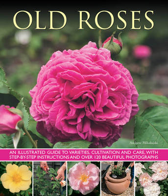 Old Roses an Illustrated Guide to Varieties, Cultivation and Care, with Step-by-step Instructions and Over 120 Beautiful Photographs by Andrew Mikolajski