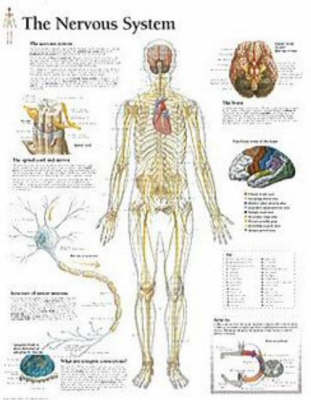 Nervous System Paper Poster by Scientific Publishing