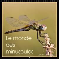 Le Monde des Minuscules 2017 Mise en Beaute des Arthropodes by Kathy Mahevo