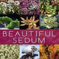 Beautiful Sedum 2017 Portraits of Beautiful Sedum Varieties by Martina Cross