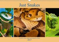 Just Snakes 2017 Loved by Some, Hated and Feared by Others by Dalyn