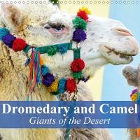Dromedary and Camel - Giants of the Desert 2018 Frugal Giants in the Desert Sand by Elisabeth Stanzer
