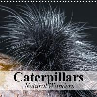 Caterpillars Natural Wonders 2018 Ingenious Masters of Transformation by Elisabeth Stanzer
