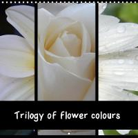 Trilogy of Flower Colours 2018 The Coloured Flower Variety Resembles a Rainbow by Martina Busch