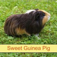 Sweet Guinea Pig 2018 Rodents and Pets by Kattobello