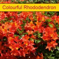 Colourful Rhododendron 2018 Beautiful Rhodendrons in Park and Garden by Kattobello