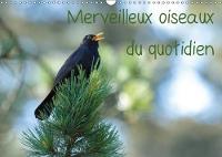 Merveilleux Oiseaux Du Quotidien 2018 Le Quotidien Offre Tant De Merveilles Naturelles Au Travers Des Oiseaux Du Jardin. by Elena Duvernay