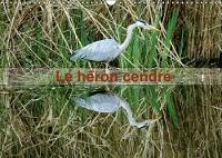 Le Heron Cendre 2018 Portrait D'un Oiseau : Le Heron Cendre Dans Le Parc Naturel Du Patis a Meaux by Patrick Casaert
