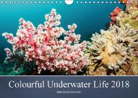 Colourful Underwater Life 2018 2018 The tropical waters of Pemuteran by Bianca Schumann