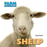 Sheep by Katie Dicker