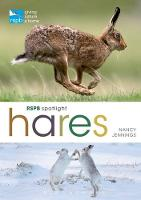 RSPB Spotlight Hares by Nancy Jennings